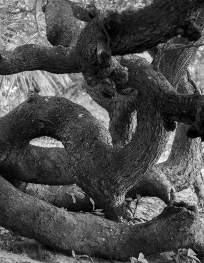 7-troncos-velhos-rizomas
